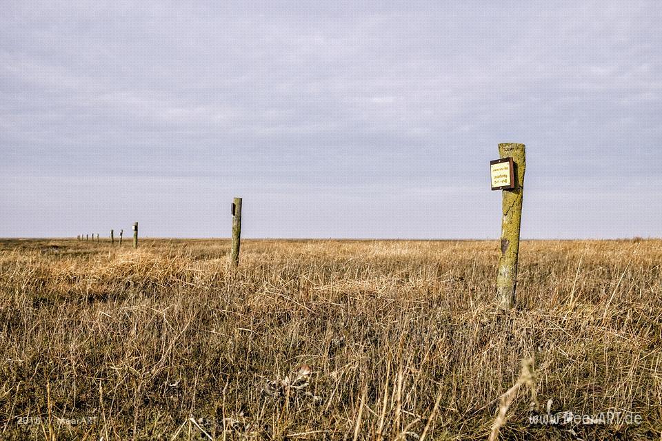 Ein schöner Wintertag auf der Halbinsel Eiderstedt in Westerhever // Foto: Ralph Kerpa