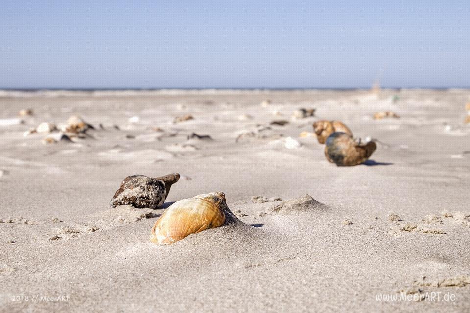 Ein sonniger Frühlingstag in Vejers Strand an der dänischen Nordseeküste // Foto: MeerART