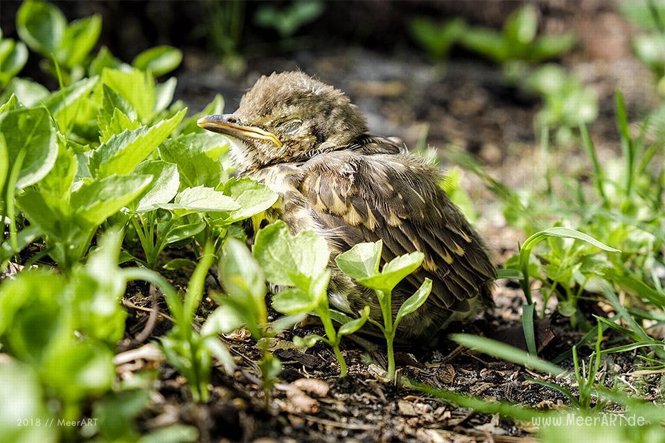 Der Frühling ist endlich da in Nordfriesland // Foto: MeerART