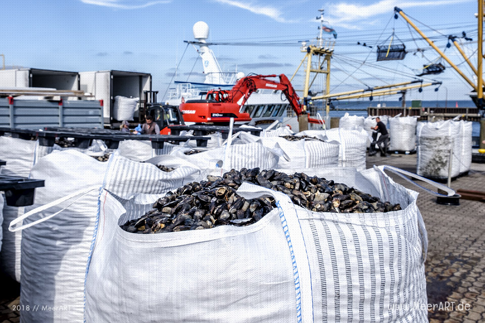 Muschelverladung im Hafen von Hörnum // Foto: MeerART