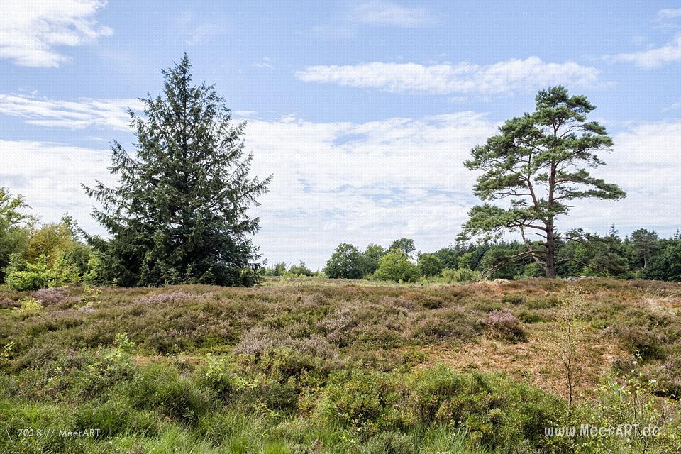 Das idyllische Naturschutzgebiet Langenhorner Heide in Nordfriesland // Foto: MeerART / Ralph KerpaDas idyllische Naturschutzgebiet Langenhorner Heide in Nordfriesland // Foto: MeerART / Ralph Kerpa