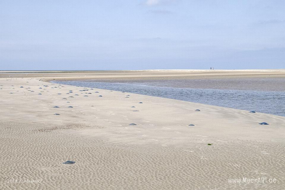 Angespülte Quallen am Strand auf Rømø // Foto: MeerART / Ralph Kerpa