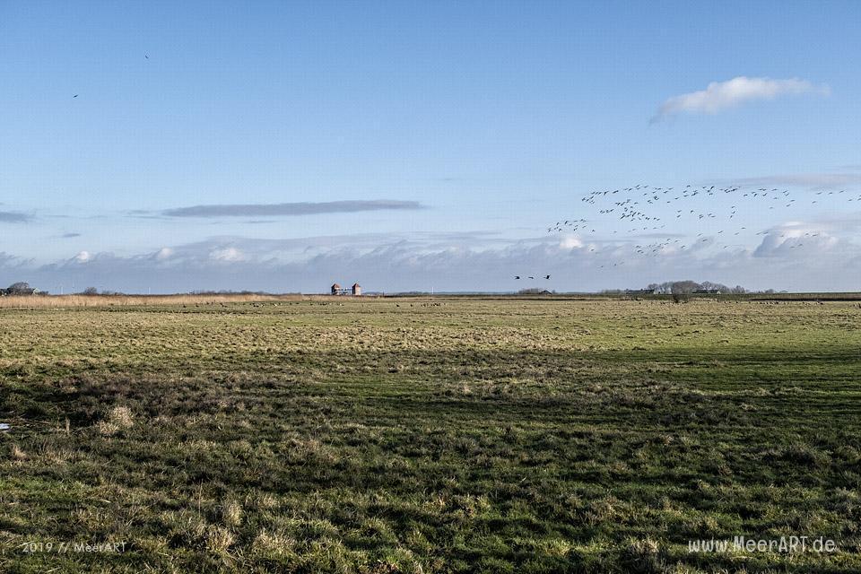 Es riecht nach Frühling in Nordfriesland // Foto: MeerART