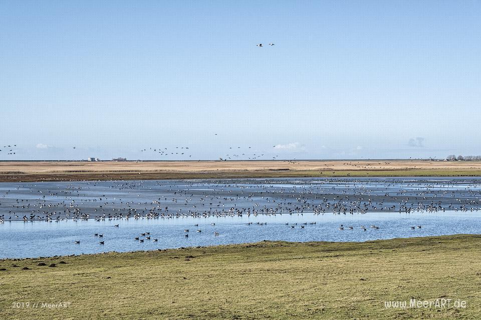 Es riecht nach Frühling in Nordfriesland // Foto: MeerART / Ralph Kerpa