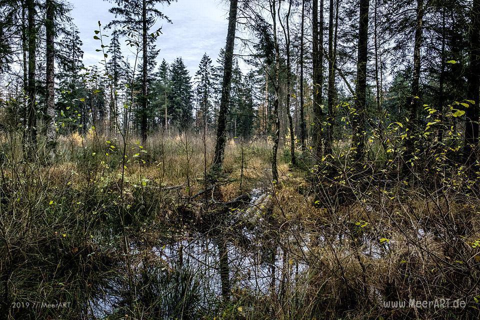 Die Süderlügumer Binnendüne und ein Märchenwald // Foto: MeerART / Ralph Kerpa