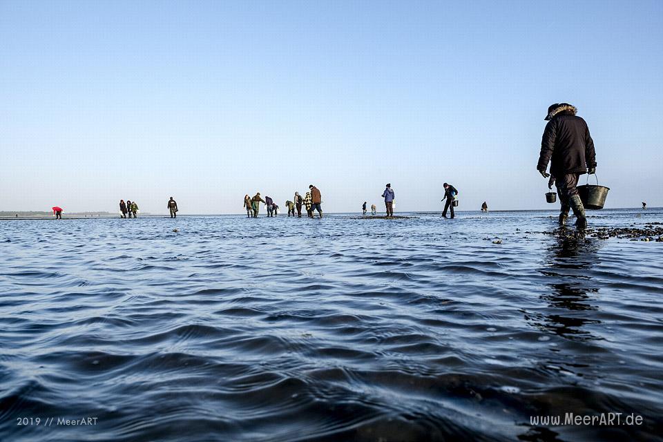 Zum Ausklang des Jahres noch einmal nach Rømø, mit Austernsafari und 4 Gänge Menü // Foto: MeerART / Ralph Kerpa