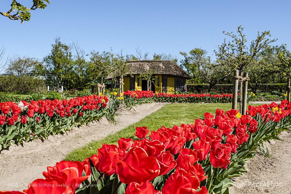 Nolde Museum - Impressionen aus dem Nolde-Garten im April 2020 // Foto: Nolde Stiftung Seebüll / Ralph Kerpa