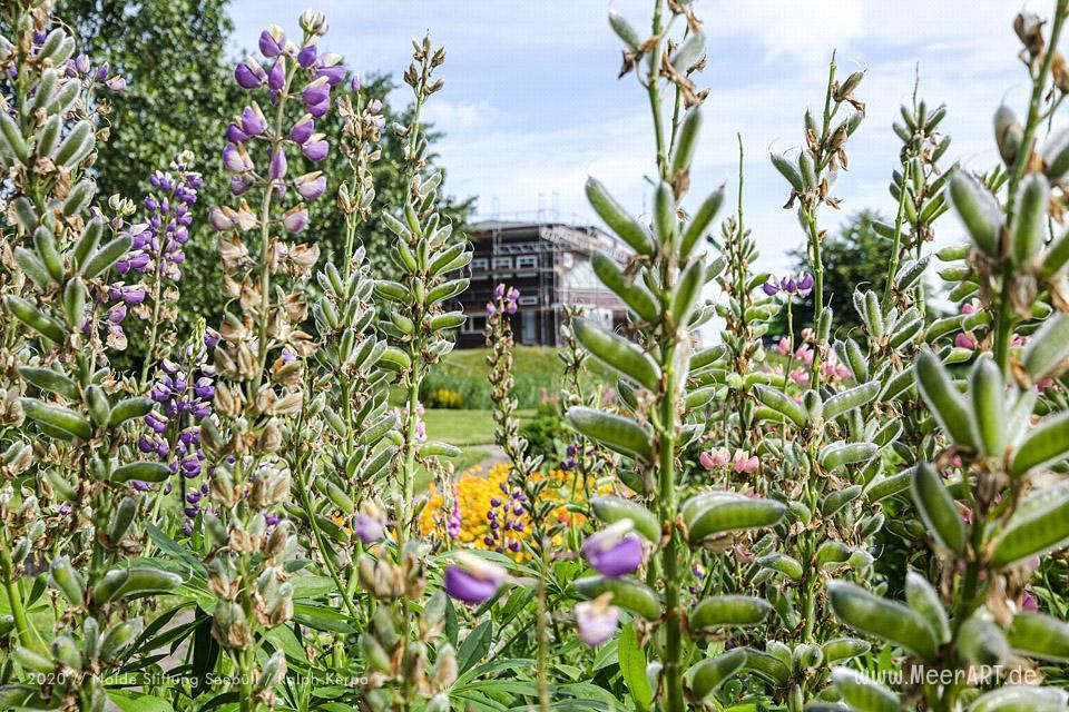 Nolde Museum - Impressionen aus dem Nolde-Garten im Juni 2020 // Foto: Nolde Stiftung Seebüll / Ralph Kerpa