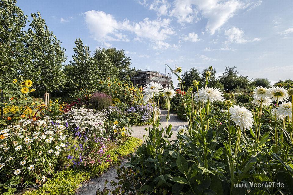 Nolde Museum - Impressionen aus dem Nolde-Garten im August 2020 // Foto: Nolde Stiftung Seebüll / Ralph Kerpa