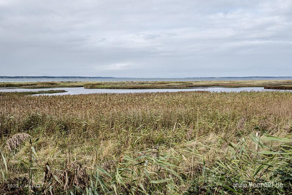 Herbstimpressionen aus dem wunderschönen Naturschutzgebiet Geltinger Birk // Foto: MeerART
