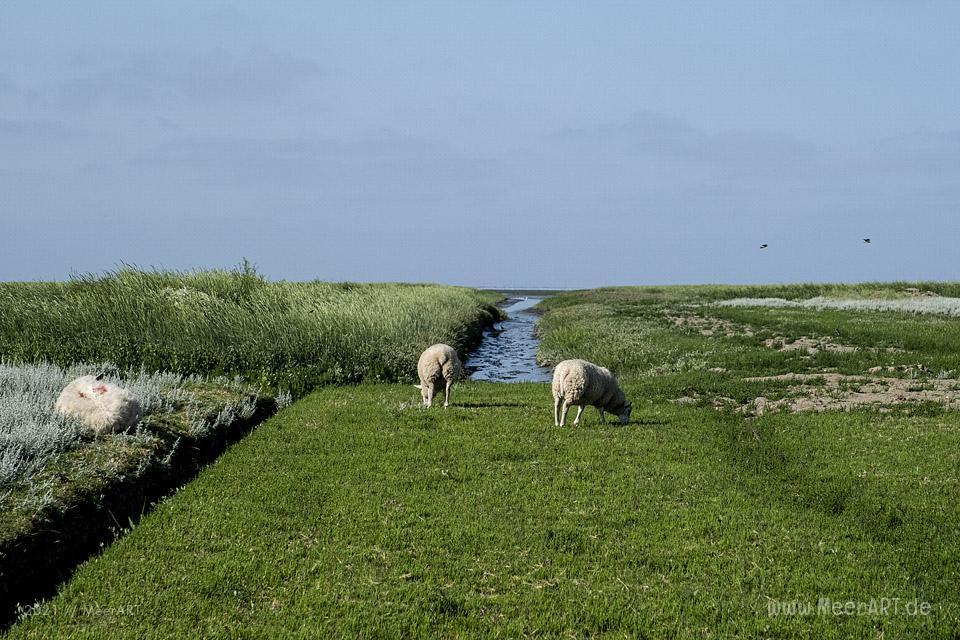 Nordfriesische Idylle am Deich // Foto: MeerART / Ralph Kerpa